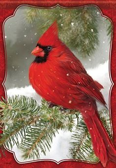 Red Cardinal House Flag - Carson - Red Cardinal in the Snow Pretty Birds, Beautiful Birds, Illustration Noel, Christmas Bird, Christmas Topper, Foto Real, Cardinal Birds, Christmas Paintings, Bird Pictures
