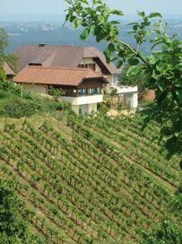::: Weinbau Familie Ulz ::: Vineyard, Outdoor, Outdoors, Outdoor Games
