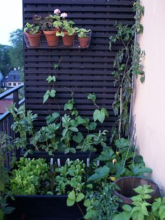 Find out even more by going to the photo link Container Gardening, Balcony Gardening, Photo Link, Green Garden, Gardening For Beginners, Go Green, Horticulture, Trellis, Old Houses