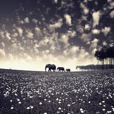 Diciannove Elephante  Why it is relevant? It's not  What you like about the image. Scenery  What inspiration it provides - what aspects of this inspiration will you or could you use in your own artwork? It has good scenery.