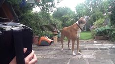 The Next Music Star | The Animal Rescue Site Blog. This dog has some serious pipes and some pretty awesome talent!