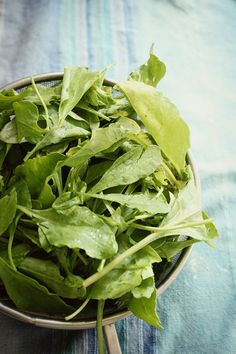 Fresh organic local baby spinach