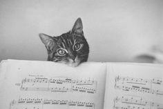 La Partition, 1982, photo by Edouard Boubat Gorgeous cat kitten adorable