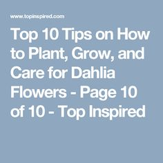 Top 10 Tips on How to Plant, Grow, and Care for Dahlia Flowers - Page 10 of 10 - Top Inspired