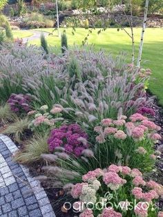 Fabulous mix of ornamental grasses and other perennials. Sedum for Bees!