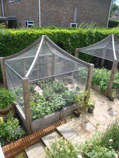 Potager Garden, Veg Garden, Vegetable Garden Design, Garden Beds, Backyard Greenhouse, Backyard Landscaping, Back Gardens, Outdoor Gardens, Fruit Cage