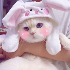Things that make you go AWW! A place for really cute pictures and videos! Cute Baby Cats, Cute Cat Gif, Cute Cats And Kittens, Cute Little Animals, Cool Cats, Kittens Cutest, Cute Babies, Cute Cat Wallpaper, Cat Aesthetic
