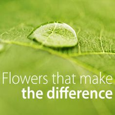 How do you know if a flower is truly sustainable?  Flowers that make the difference grow in a farm where every drop of water counts.