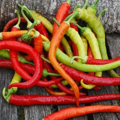 """CORBACI is a unique and wonderful sweet pepper that turns from light green, to yellow, to orange and finally to bright red.  It can be harvested and used at any stage. Slender fruits are 10-12"""" long.  This rare heirloom is from Turkey and has a very rich, sweet flavor.  A perfect choice for fresh eating,  pickling or frying.  Very productive plants need staking or a small cage to keep them from falling over due to the weight of the fruits.  A great choice for markets.  You can start eating…"""