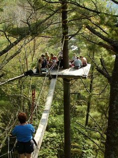 11 Treetop Walks Designed For Nature Lovers // The Haliburton Canopy Tour in the Haliburton Forest in Ontario, is part of a guided tour that teaches you about the ecology of the forest you're in.