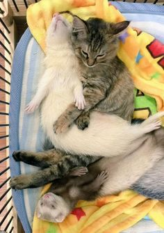 Cute Little Baby Animals To Draw around Funny Facts About Cats And Kittens inside Cute Animals Video Clips whenever Cats And Kittens For Sale Liverpool Cute Kittens, Cute Ferrets, Cats And Kittens, Animals And Pets, Baby Animals, Funny Animals, Cute Animals, Small Animals, Animals Images