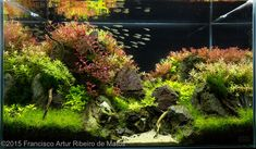 Aquascape by Francisco Matos. Pin by Aqua Poolkoh Planted Aquarium, Aquarium Aquascape, Aquascaping, Diy Aquarium, Aquarium Design, Marine Aquarium, Nature Aquarium, Amazing Aquariums, Terraria