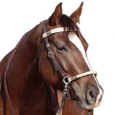 Barefoot brand. High quality Acorn 2-in-1 bridle. Convert from bit to bitless in seconds! Genuine two-tone rawhide embellishments.