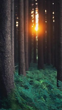38 Ideas Tree Forest Wallpaper Nature For 2019 Forest Wallpaper Iphone, Wallpaper Travel, Trendy Wallpaper, Wallpaper Wallpapers, Nature Pictures, Beautiful Pictures, Beautiful Places, Tree Photography, Photography Wallpapers