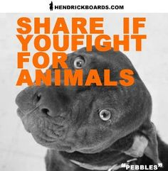 END Dog Fighting & STOP Animal Abuse - www.EndDogFighting.com