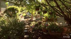 Paradise garden in Liberty Hill|April & Cliff Hendricks|Central Texas Ga...