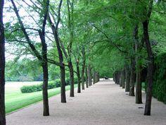 The Miller Garden  Dan Kiley - Almost Famous | The Cultural Landscape Foundation