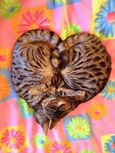 """That's just too adorable!  Heart shaped kittens sleeping.  Support """"Southern California Cat Adoption Tails"""" www.catadoptiontails.org."""