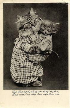 Vintage Dressed Cat Mother holding Kitten