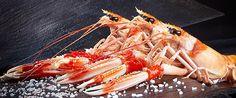 CIGALAS - La cigala es un crustáceo muy apreciado en la gastronomía española. Podemos decir que la carne de la cigala tiene un gran número de proteínas mientras que su nivel calórico es muy pequeño teniendo una mínima parte de grasa. Además de aportar muchas vitaminas del grupo B.