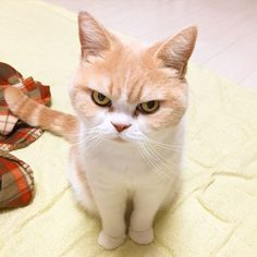 Cats That Know How To Give A Death Stare... (17 Photos)