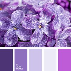 Цветовая палитра №1463