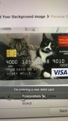 Crazy cat man has identity stolen Crazy Cat Man, Crazy Cats, Cat Lady, Background Images, Identity, Cards, Cat, Picture Backdrops, Wallpaper Backgrounds