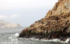 Diarios de viaje: Excursión de un día a Islas Palomino, en Lima, Perú. Aves y leones marinos en libertad a dos horas de la capital peruana.