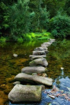 Forest lake stepping stones