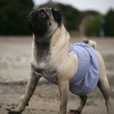 @Erica Cerulo Mooney @Emily Schoenfeld Carter I think Mia needs a new outfit for our next pool party