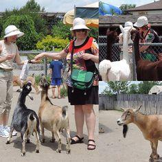 Goat-feeding fun for Xtina and @kellyoyo at the African Wild Safari.