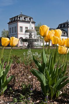 Frühling, Schloß Philippsruhe