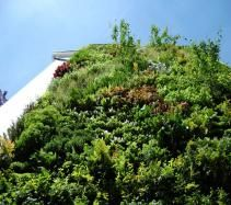 Easiwall green wall