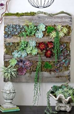 A pallet of succulents from life buzz