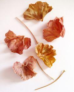 Dried geranium leaves