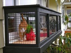 cat cage outdoor over tope of pergola - Google Search