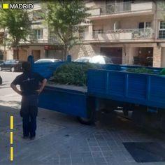 Polis Sepanyol berjaya rampas 40 pokok ganja ditanam di atas bumbung sebuah pangsapuri selepas ia secara tidak sengaja dirakam helikopter TV lakukan penggambaran Vuelta.    #sinarharian #viral #basikal #ganja Motion Video, Ganja, Outdoor Decor