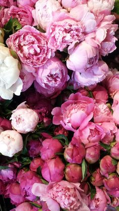 pink flowers pink flowers The post pink flowers appeared first on Diy Flowers. pink flowers pink flowers The post pink flowers appeared first on Diy [.