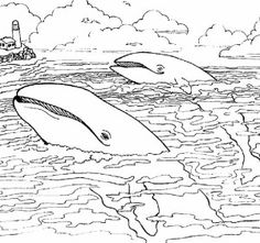 mom and baby whale on dive sea animals coloring page free - Realistic Wildlife Coloring Pages