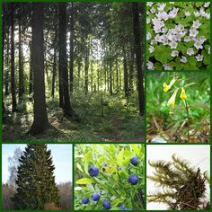 Tuore kangasmetsä. Tree Forest, Environmental Science, Science And Nature, First Grade, Geography, Finland, Photo And Video, Education, Forests