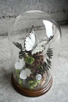 Vintage Taxidermy Butterflies Specimen by ThEeRabbitHole on Etsy Cloche Decor, Deco Floral, The Bell Jar, Home And Deco, Glass Domes, Taxidermy, Diy And Crafts, Projects To Try, Crafty