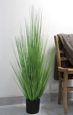 gramin es avec plumeaux en pot grand mod le gramin es. Black Bedroom Furniture Sets. Home Design Ideas