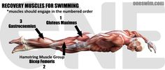 Building Kick Recovery Muscles (Glute and Hamstring Muscle Chain Development) Hamstring Muscles, Core Muscles, Swim Training, Training Equipment, Conditioning Training, Competitive Swimming, Ankle Weights, Muscle Memory, Learn To Swim