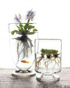 Indoor water plants