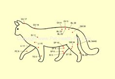 Both humans and animals can benefit from alternative treatments, such as the ancient Asian science of acupuncture.  http://www.acupunctureschoolsu.com/