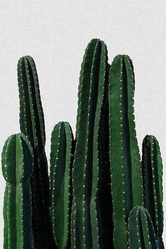 Cactus I Art Print by Orara Studio   iCanvas
