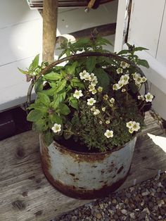 Flowers planted in rusty buckets