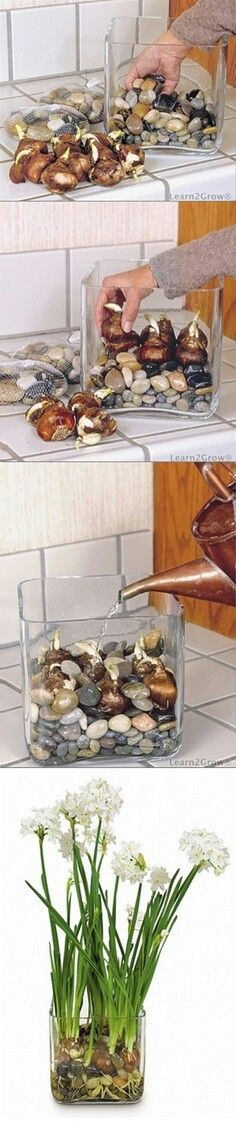 Bulbos en agua