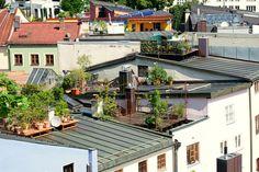 Taras na dachu? Brzmi dobrze! :) #tarasdrewniany #massaranduba