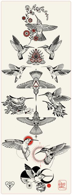 Official Love Hawk Newsletter March : Hummingbirds (Top Design Drawing)